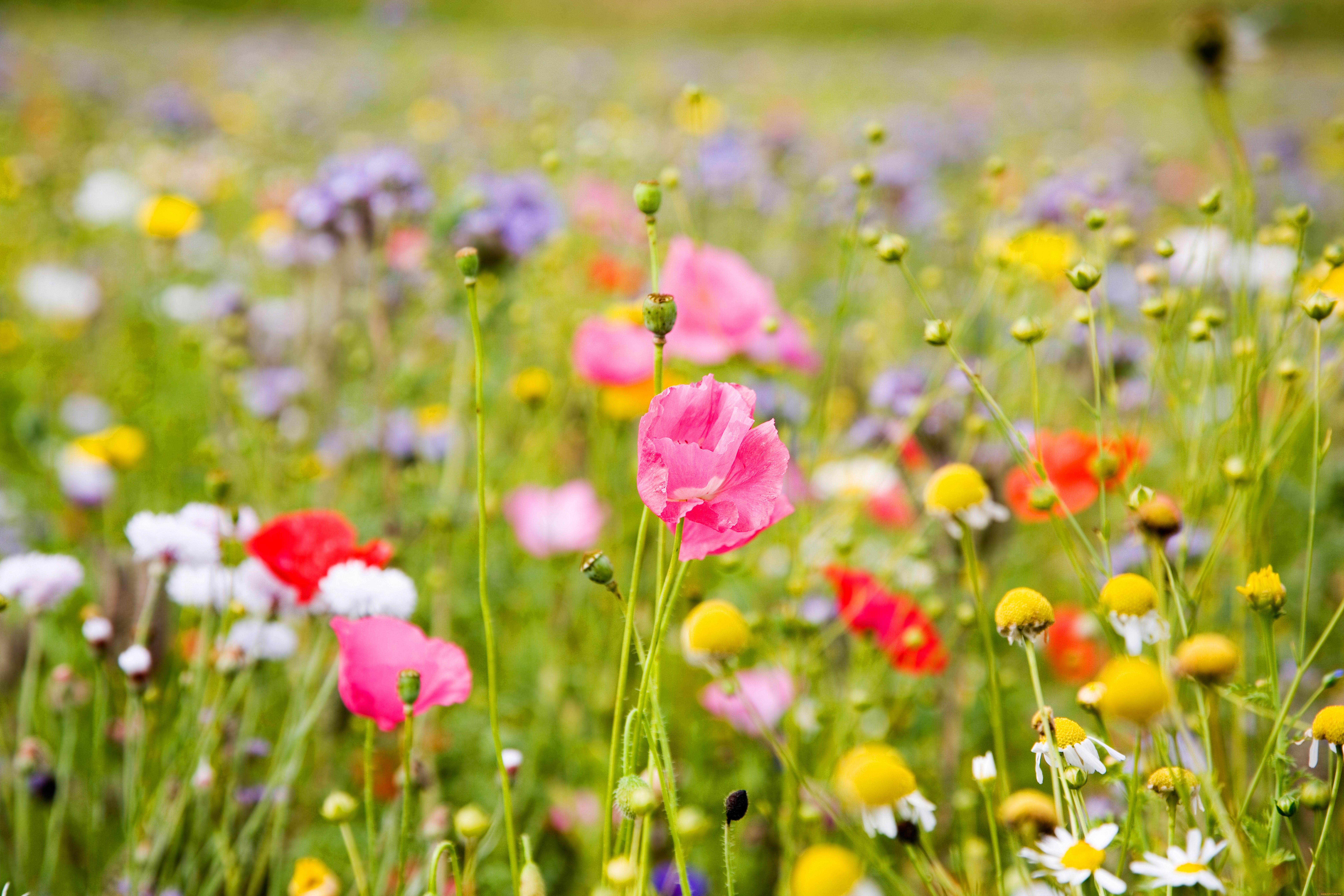 Сделать полевые цветы